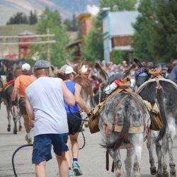 Burro Days in Fairplay Colorado