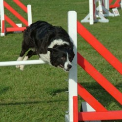 15th Annual Doggie Olympics in Fort Collins Colorado