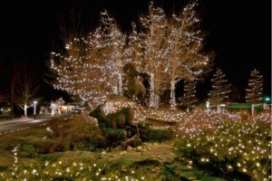 Estes Park Colorado holiday photo