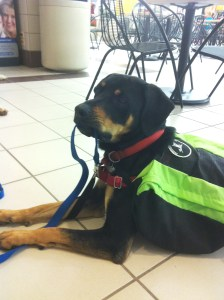 Freedom Service dogs