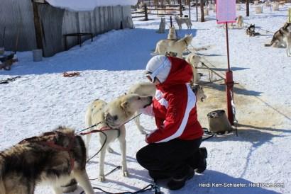 WP dog sledding HeidiTown kisses