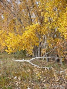 Fall in Colorado HeidiTown.com