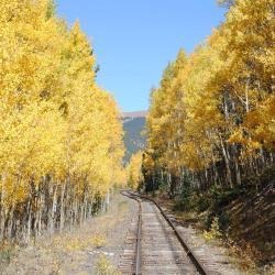 Viewing fall colors via a Colorado train ride