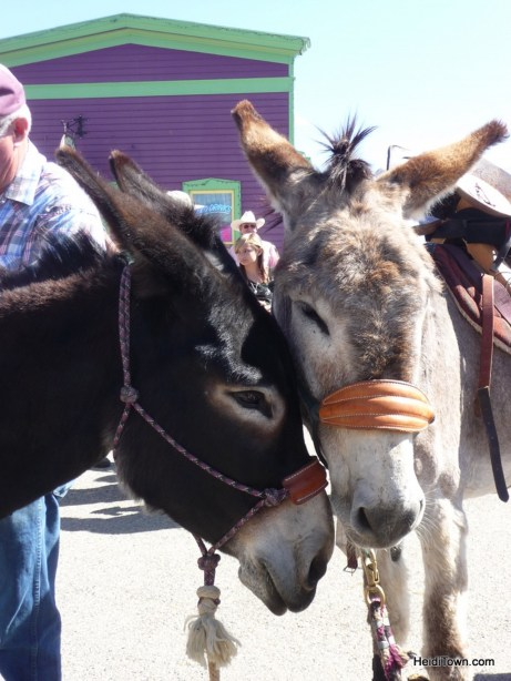 Burro Days Fairplay Colorado HeidiTown.com