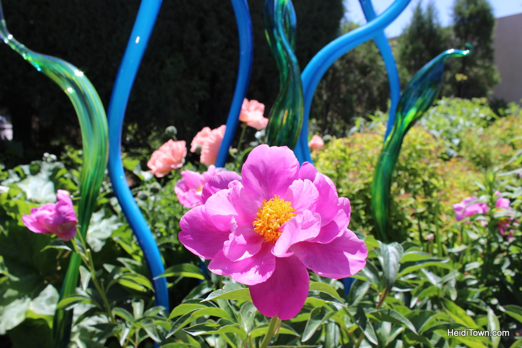 Chihuly at Denver Botanic Gardens 2014 - HeidiTown (28)
