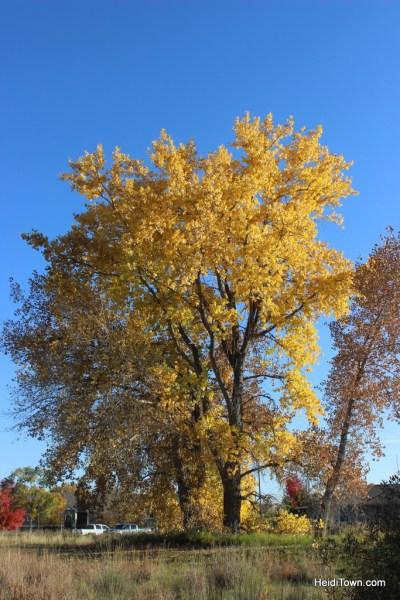 Colorado leaf walk October 19, 2014. HeidiTown (21)