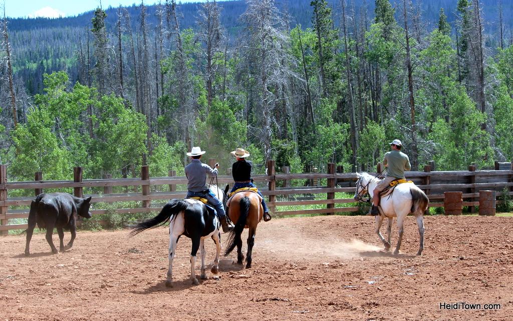 Cattle penning at Latigo Ranch. HeidiTown.com
