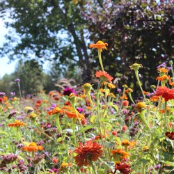 A fall visit to the Denver Botanic Gardens. HeidiTown (3)