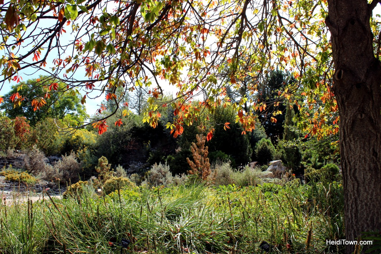 A fall visit to the Denver Botanic Gardens. HeidiTown (6)