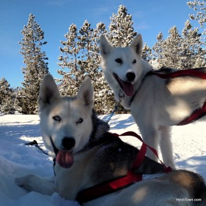 sled dogs at Snow Mountain Ranch. HeidiTown.com