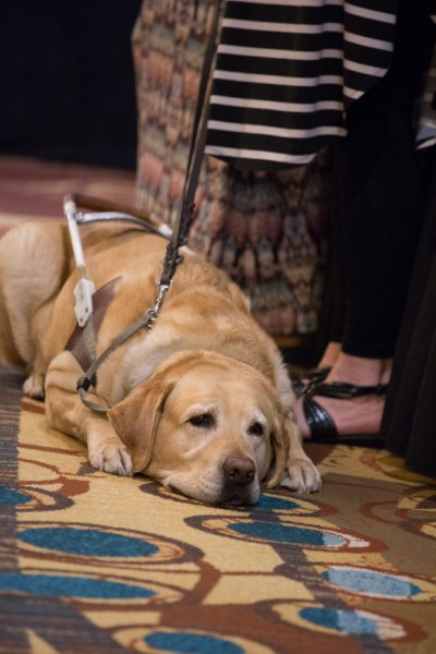 A guide dog at Wine Fest. All photos courtesy of DRS.