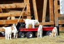 How to take a vacation in your own town. Visit a Farm, Horse & Hen, Hayden, CO. HeidiTown.com