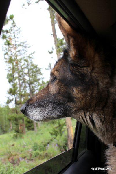 A Snow Mountain Ranch Summer to-do list. dog-friendly. HeidiTown.com
