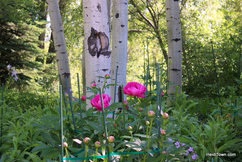 Six Reasons to Visit Steamboat Springs, Yampa River Botanic Park, HeidiTown.com