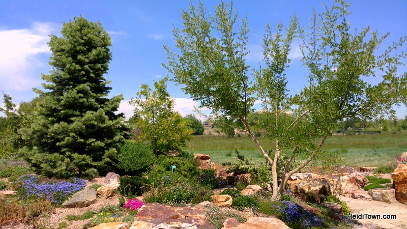 Flower Power in Fort Collins, a Visit to The Gardens on Spring Creek. Rock Garden pic. HeidiTown.com