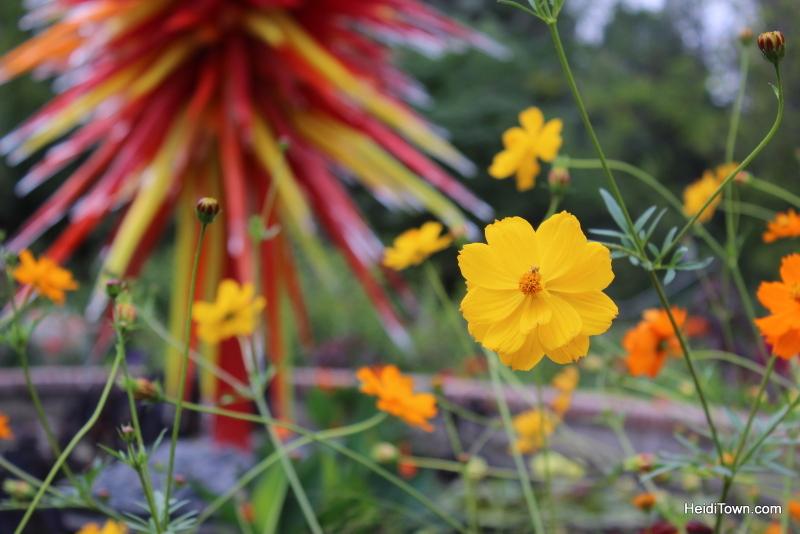 Shooting All the Flowers at Denver Botanic Gardens (3)