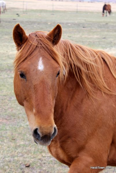 Visit 350 Wild Horses at Deerwood Ranch in Wyoming. HeidiTown 10