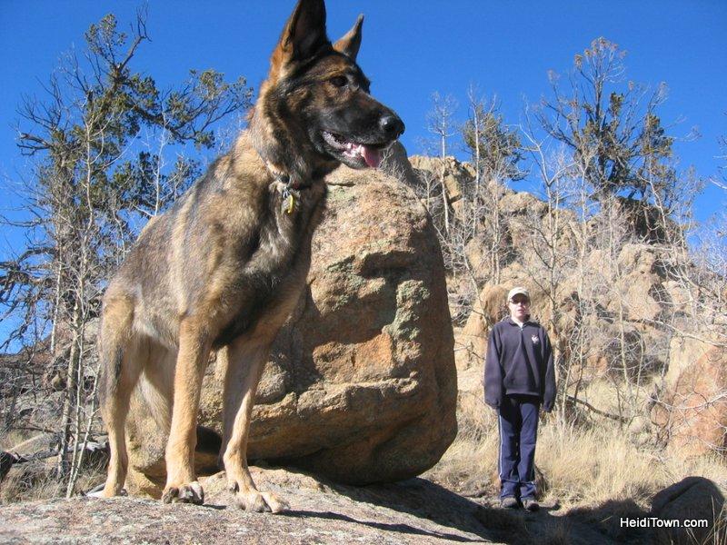 Dog is my Co-Pilot Photos 16. HeidiTown (3)