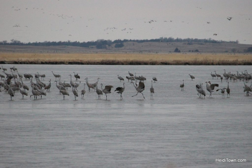 A Night with the Sandhill Cranes at the Crane Trust in Nebraska. HeidiTown (11)