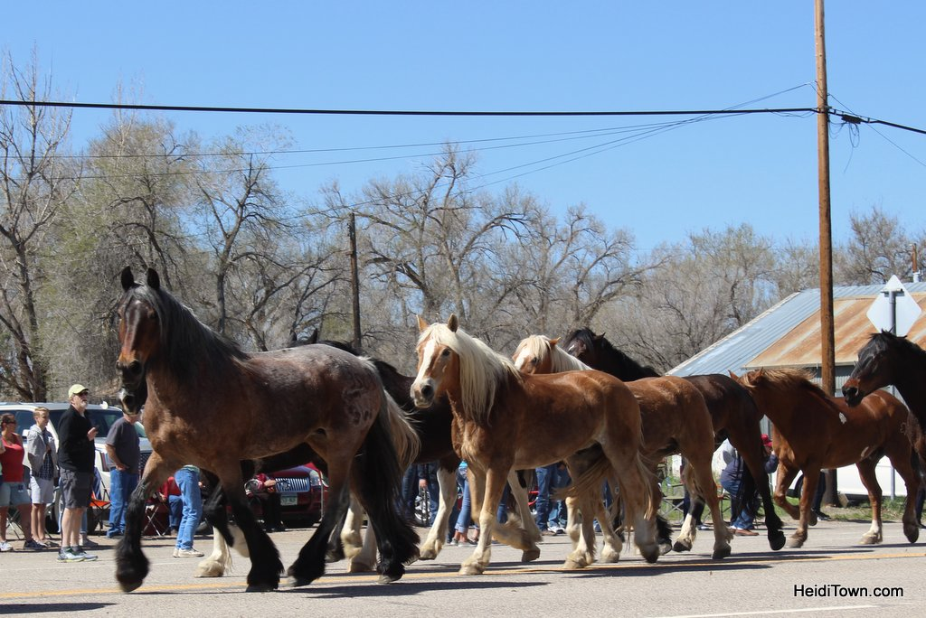 Great American Horse Drive 2019 (4)
