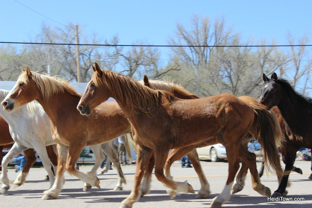 Great American Horse Drive 2019 (5)