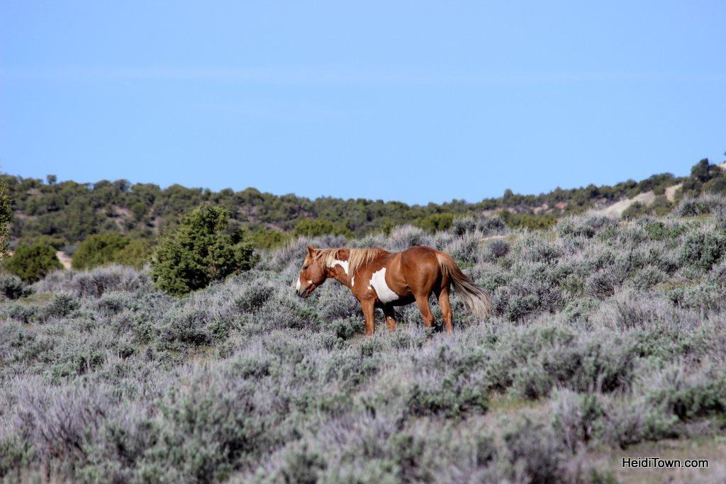 The Wild Horses of Northwest Colorado Sand Wash Basin HeidiTown (1)