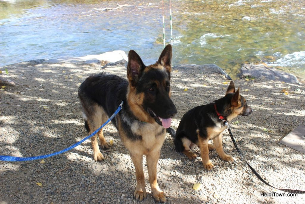 Salida, Colorado is for the Dogs Dog-Friendly Spots Around Town. HeidiTown (21)