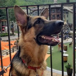 Vail, Colorado is Open for Business Dog-Friendly Lodging. HeidiTown (5)