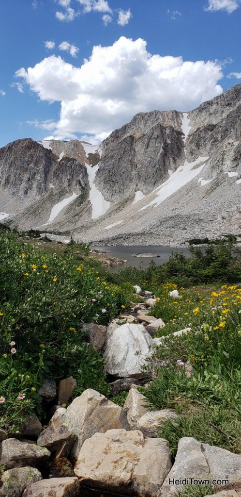 The Snowy Range in Living Color Wildflowers in Wyoming. HeidiTown (9)