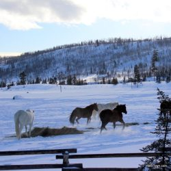 Hot Tubs & Horses at Vista Verde Ranch in Colorado