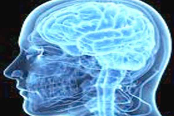 US scientists developed artificial human brain researchers claim human brain grow in lab first time.