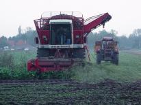 De bieten worden al rijdend over gestort in de aanhangwagen achter de tractor.