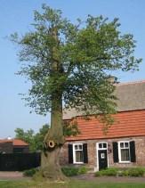 6 kale linde boom erik van asten
