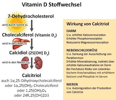 Stoffwechsel von Vitamin D