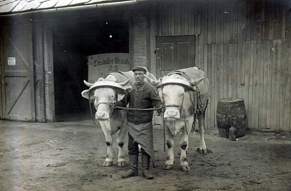 Ochsengespanne zur Bierauslieferung in der Brauerei Einsiedel um 1911