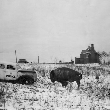 Face off in South Park, January 20, 1940 | Eyes of Pittsburgh | Exhibits | Heinz History Center