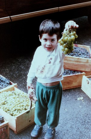 Third-generation winemaker Per Argentine shows off grapes, 1985. Gift of Peter Argentine, 1995.0380, Detre Library & Archives at the History Center.