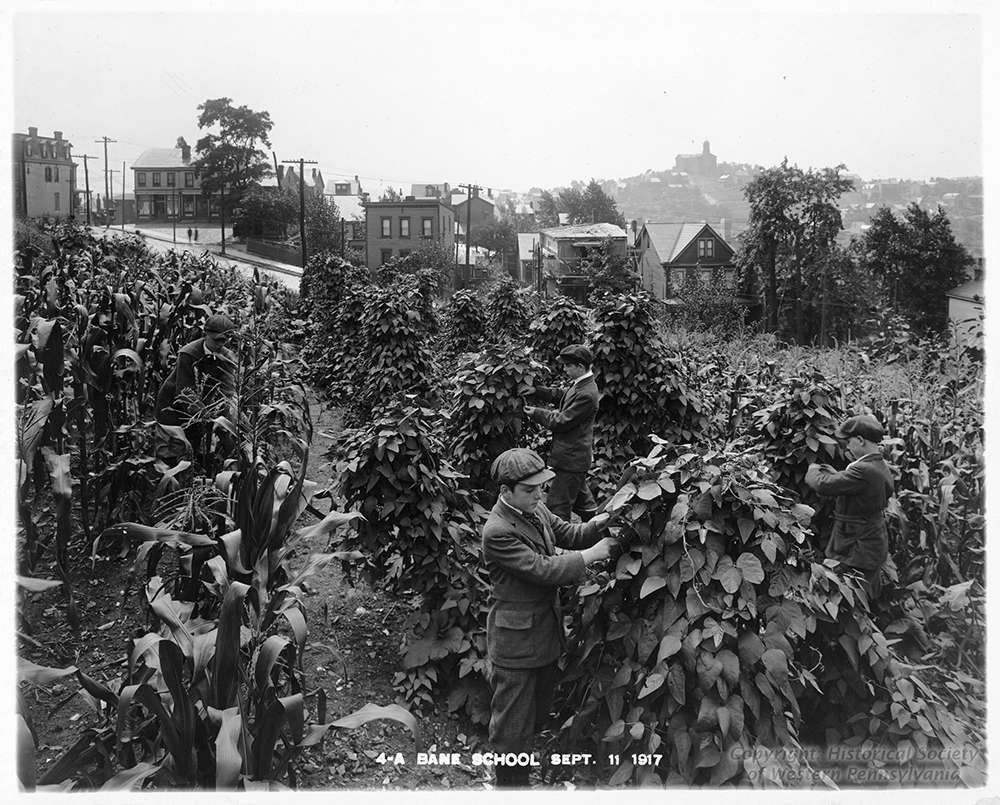 Corn and beans grow in abundance at the Bane School on the South Side Slopes, 1917. | The Edible Schoolyard, 1915