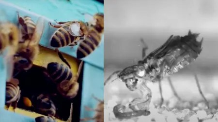 Bioinspiration: Von Libellen und Bienen lernen