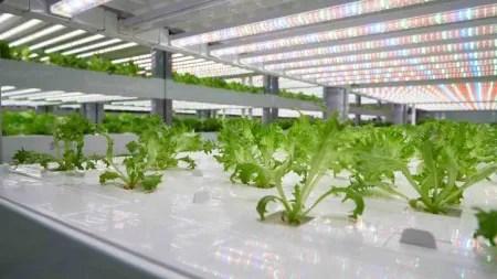 Corona bringt vertikale Landwirtschaft voran