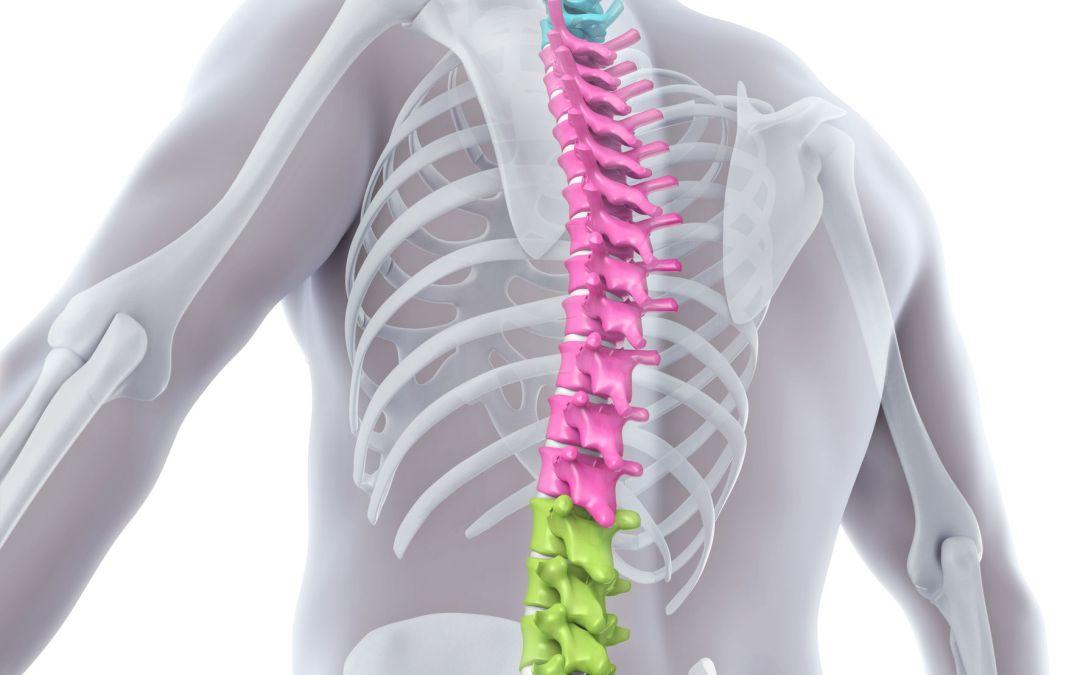 Taller Feldenkrais Zoom: «Espalda suave y sin tensión mejorando su apoyo en las caderas» Domingo 11 Abril 10h a 13h