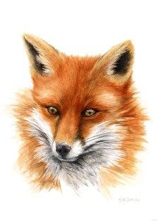 Blair Fox