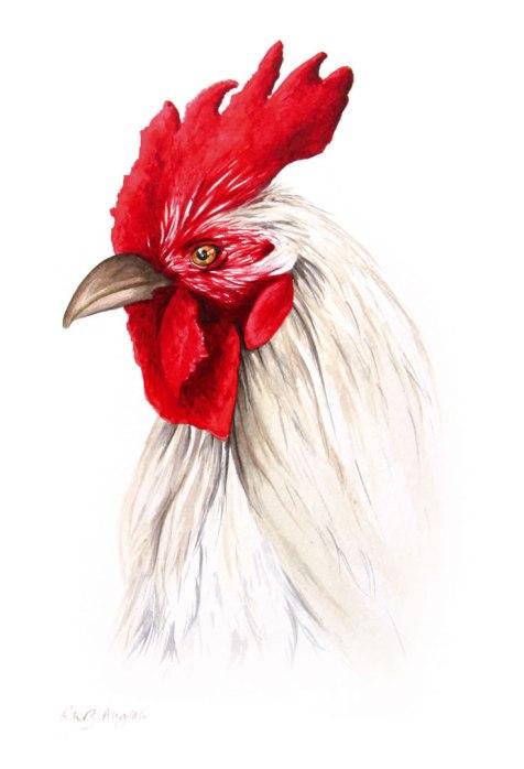 'The Cardinal'