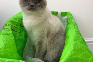 Bluejohn on Green Bag, smile on Saturday, cat,