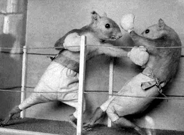 TaxidermyHartPrizeFight[1].jpg
