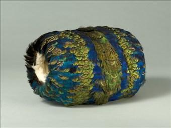 Grand manchon cylindrique en plumes de lophophore et de paon. Porté par la princesse Mathilde. Plumes de lophophore et de paon, bordure des ouvertures en fourrure d