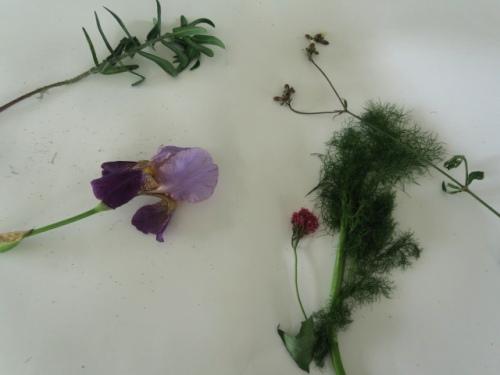 fleurs argenteuil2