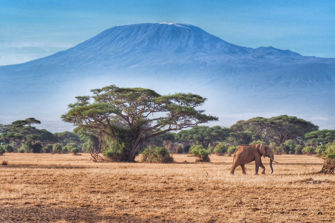 Image result for amboseli national park