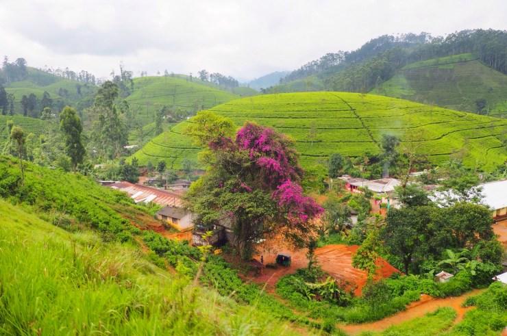 Beautiful countryside views on the Kandy to Ella train in Sri Lanka