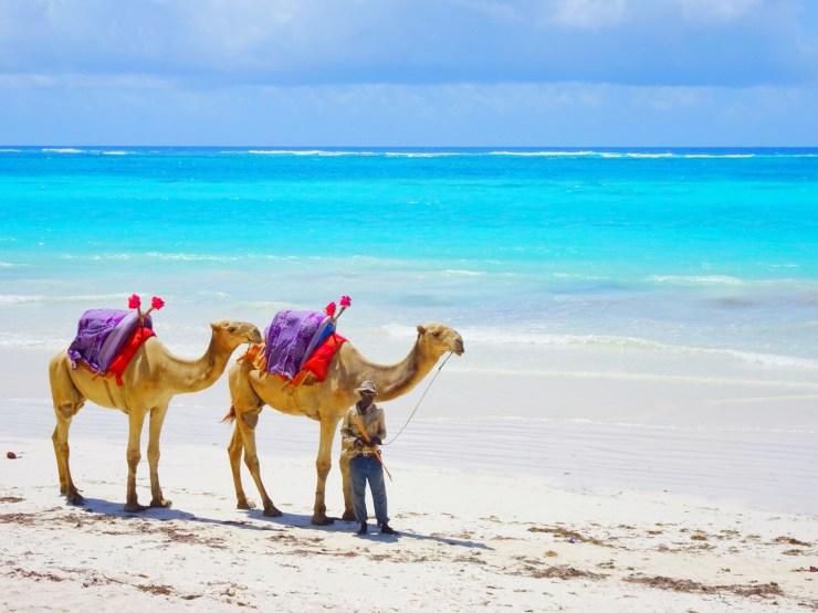 Camels on Diani Beach Kenya